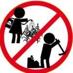 Lavoratore minorile il datore di lavoro è il genitore non trova applicazione le norme di tutela del lavoro minorile – Cassazione sentenza n. 41591 del 2017